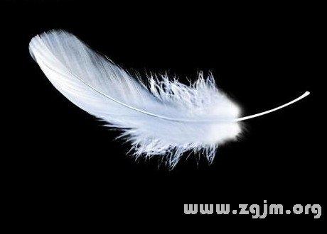 梦见羽毛 鸡毛
