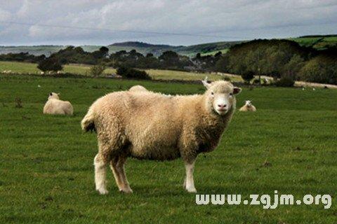梦见别人杀羊