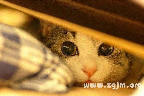 梦见躲猫猫