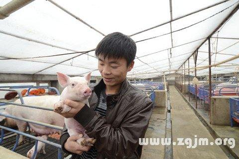 梦见抱着猪崽