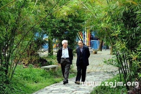 梦见竹林中漫步