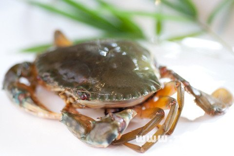 梦见吃螃蟹