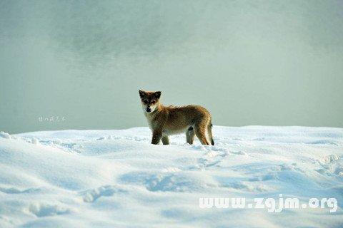 梦见深雪中迷路