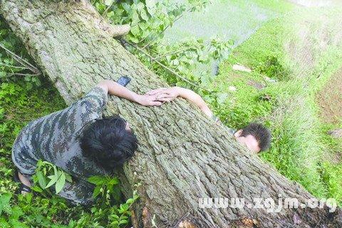 梦见大风吹断大树