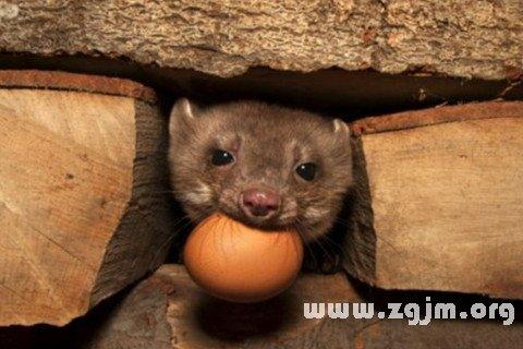 梦见偷鸡蛋