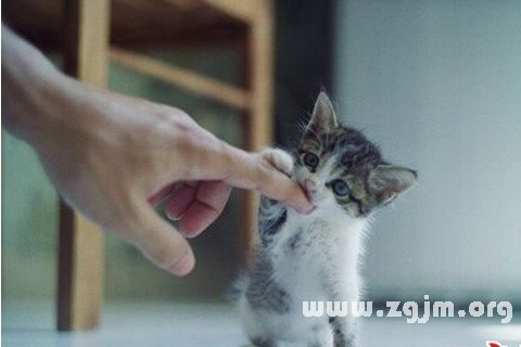 梦见猫咬我_周公解梦梦到猫咬我是什么意思_做梦梦见