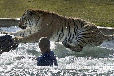 梦见被老虎追