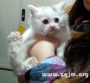 梦见抱白猫是什么意思