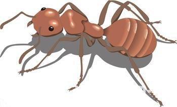 梦见踩死蚂蚁