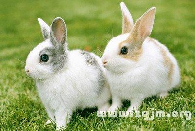 梦见拔兔子草什么意思