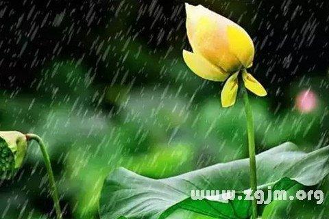 梦见细丝绵绵的梅雨