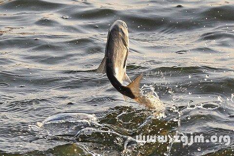 梦见鱼在空中飞