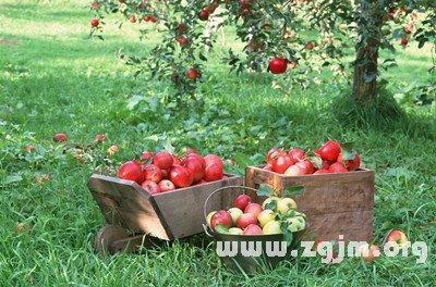 下面详细介绍关于梦见爱人送苹果的相关解法,快来看看吧!
