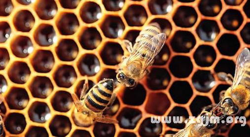 梦见蜜蜂窝_梦见蜜蜂窝