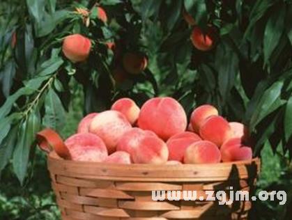 梦见桃树结满桃子