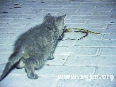 梦见猫吃蛇_周公解梦
