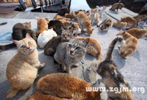 梦见很多只猫