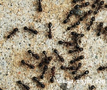 梦见成群蚂蚁