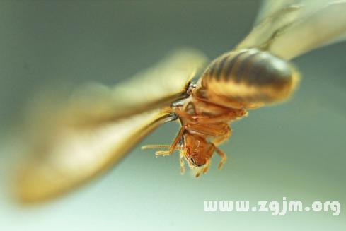 梦见蚂蚁会飞