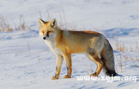 玉雕图狐狸三颗珠子含义