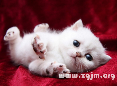 梦见可爱的猫_周公解梦