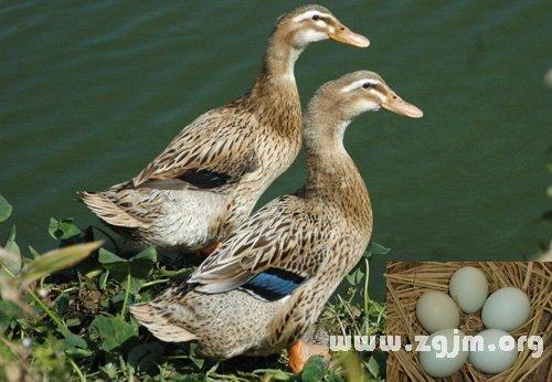 动物 鸟 鸟类 500
