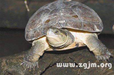 动物 龟 400_265