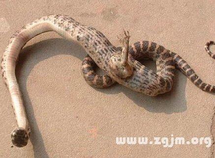 梦见交蛇是什么意思啊