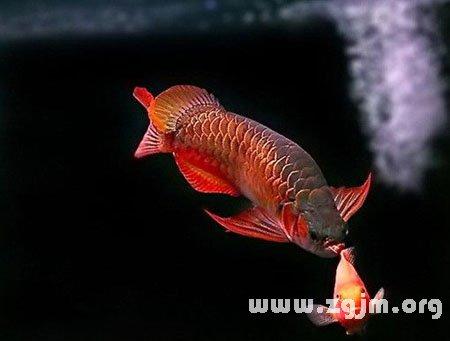 孕妇梦见鱼变成龙