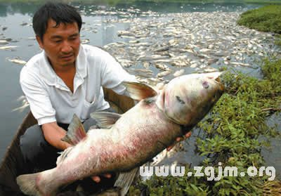 梦见捡死鱼是什么意思
