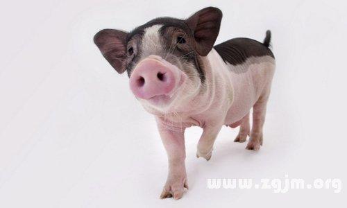 梦见猪会说话_周公解梦