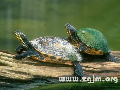 旅行蜗牛目前有电影,三个和蜜蜂这朋友好朋友,那么乌龟来了之后拿什青蛙青蛙限制图片