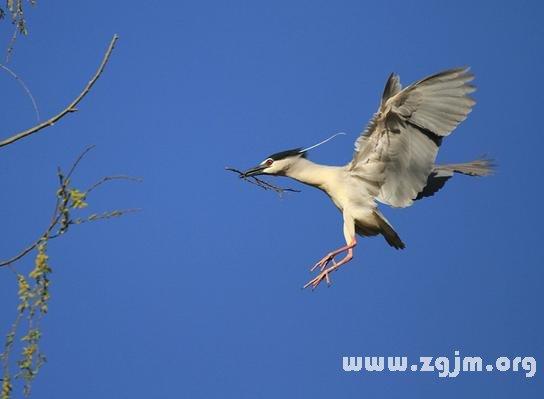 正在飞的鸟 卡通图片