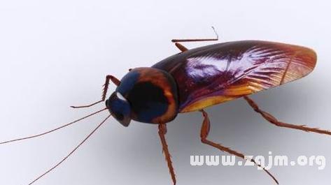 蟑螂头像图片大全