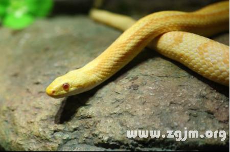 做梦梦到白色的蛇_梦到黑白相间的蛇-怀孕梦到黑白相间的蛇/孕妇梦到黑白相间的蛇 ...
