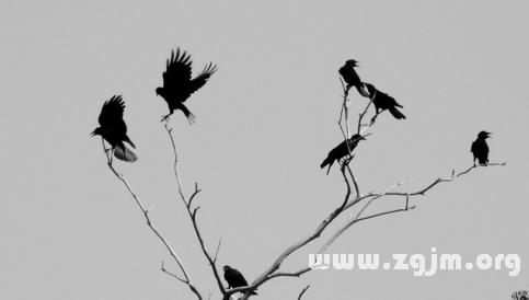梦见喜鹊自由自在地飞图片