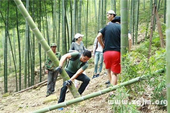 梦见竹子被自己砍断了