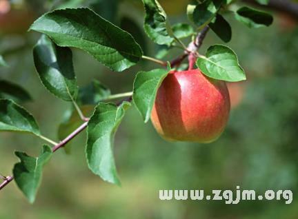 梦见看见树上长苹果