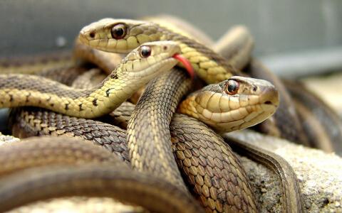 梦见自己在打好多蛇