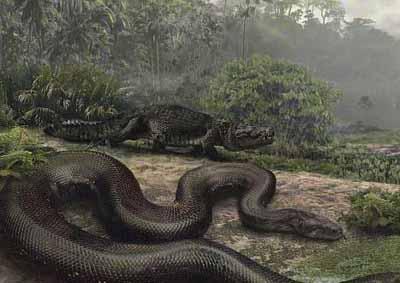 梦见打死大蟒蛇