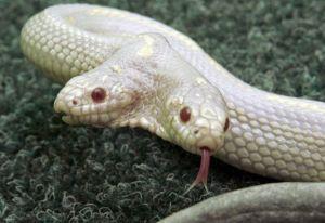 梦见大蟒蛇爬行