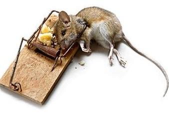 梦见别人打死很多老鼠