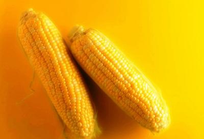 金黄的玉米