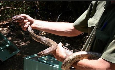 孕妇梦到蛇缠住脚腕