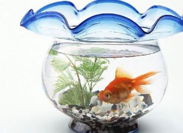 养鱼风水,办公室养鱼风水