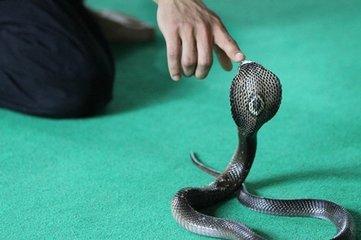 梦到被蛇咬是什么意思_梦见手指被蛇咬是什么意思的案例分析