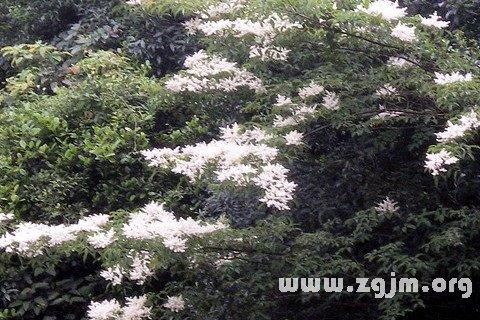 梦见树上开白花