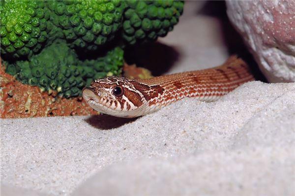 梦见床上很多蛇