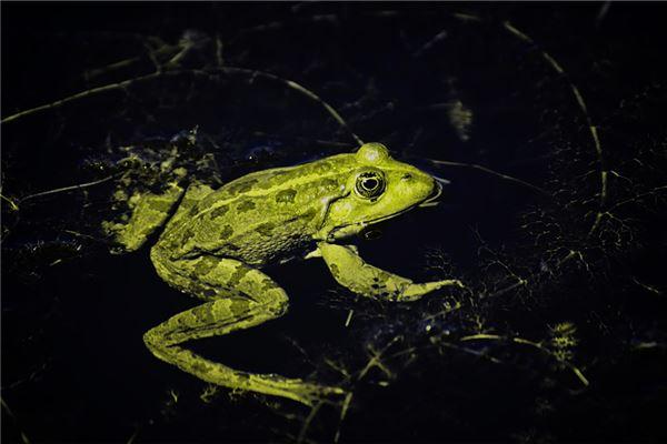 梦见青蛙在水里