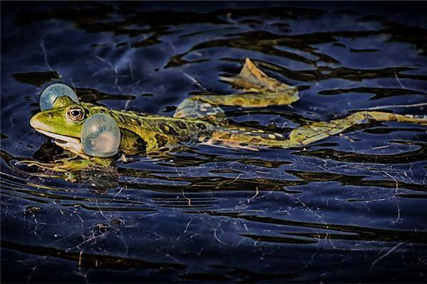 梦见青蛙在水里游